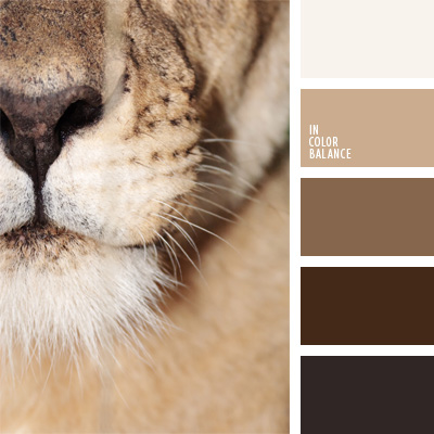 Mocha And Grey Exterior Paint